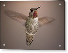Acrylic Print featuring the digital art Hummer Love by Holly Ethan