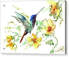 Hummibgbird And Yellow Flowers Acrylic Print