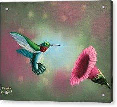 Humming Bird Feeding Acrylic Print