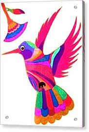 Humming Bird Acrylic Print by Kruti Shah
