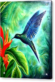 Humming Bird  Acrylic Print
