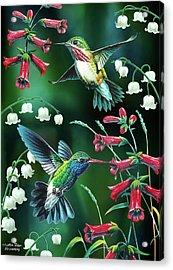 Humming Birds 2 Acrylic Print