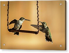 Humming Birds Acrylic Print