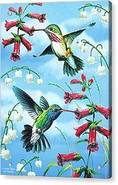 Humming Birds Acrylic Print by JQ Licensing