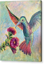 Humming Jewel Acrylic Print