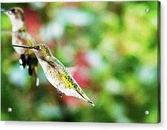 Hummingbird 07 - 9-13 Acrylic Print by Barry Jones
