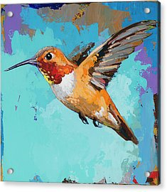 Hummingbird #11 Acrylic Print by David Palmer