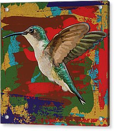 Hummingbird #12 Acrylic Print by David Palmer