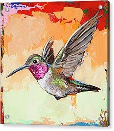 Hummingbird #13 Acrylic Print