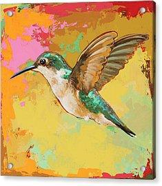 Hummingbird #19 Acrylic Print