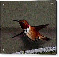 Acrylic Print featuring the photograph Hummingbird 2 - Embossed by Erica Hanel