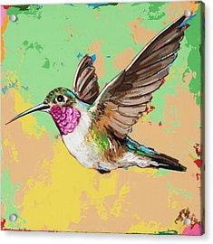 Hummingbird #21 Acrylic Print