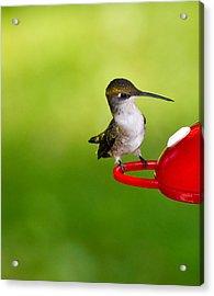 Hummingbird 4 Acrylic Print by Edward Myers