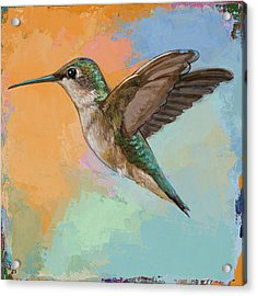 Hummingbird #5 Acrylic Print by David Palmer