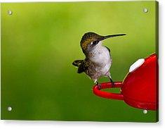 Hummingbird 5 Acrylic Print by Edward Myers