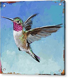 Hummingbird #6 Acrylic Print by David Palmer