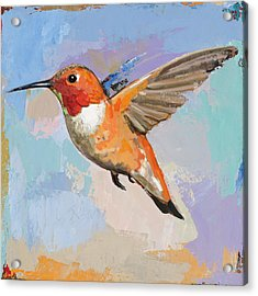 Hummingbird #7 Acrylic Print by David Palmer