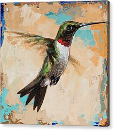Hummingbird #9 Acrylic Print by David Palmer