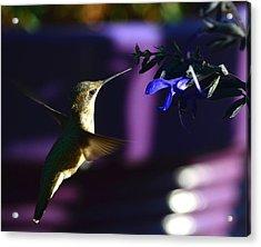 Hummingbird And Blue Flower Acrylic Print