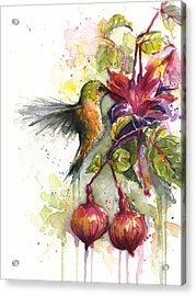 Hummingbird And Fuchsia Acrylic Print by Olga Shvartsur