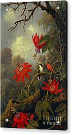 Hummingbird And Passionflowers 1877 Acrylic Print by Padre Art