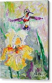 Hummingbird And Yellow Bearded Iris Summer Splendor Acrylic Print