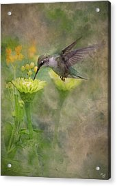 Hummingbird Art Acrylic Print by Ron Grafe