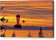 Hummingbird At Sunset. Acrylic Print