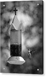 Hummingbird - Bw Acrylic Print