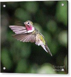 Hummingbird Acrylic Print by Dennis Wagner