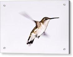 Hummingbird Acrylic Print by Edward Myers