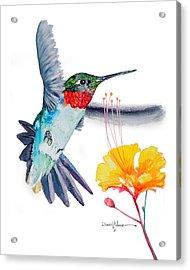 Da169 Hummingbird Flittering Daniel Adams Acrylic Print