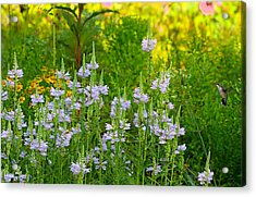 Acrylic Print featuring the photograph Hummingbird Heaven by William Jobes