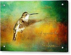 Hummingbird Hover Acrylic Print
