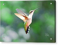 Hummingbird Hovering Acrylic Print
