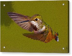 Hummingbird In Flight- Abstract Acrylic Print by Tim Grams