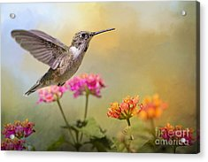 Hummingbird In The Garden Acrylic Print by Bonnie Barry