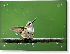 Hummingbird In The Rain Acrylic Print by Christina Rollo