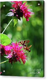 Acrylic Print featuring the photograph Hummingbird Moth by Lila Fisher-Wenzel