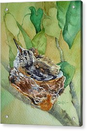 Hummingbird Nestiing Acrylic Print