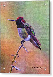 Hummingbird On A Stick Acrylic Print