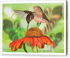 Acrylic Print featuring the painting Hummingbird On Flower by Anne Beverley-Stamps