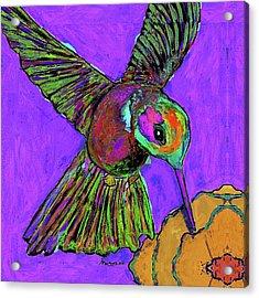 Hummingbird On Purple Acrylic Print