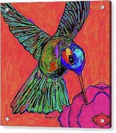 Hummingbird On Red Acrylic Print