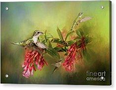 Hummingbird Paradise Acrylic Print