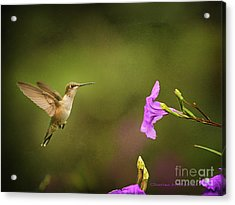 Acrylic Print featuring the photograph Hummingbird Pink Flower by Charles McKelroy