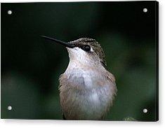 Hummingbird Portrait Acrylic Print by Alan Skonieczny