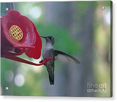 Acrylic Print featuring the photograph Hummingbird  by Rand Herron