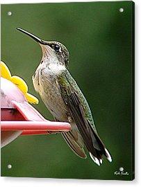 Hummingbird Acrylic Print by Rick Friedle