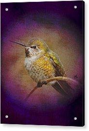 Acrylic Print featuring the digital art Hummingbird Rufous by John Wills